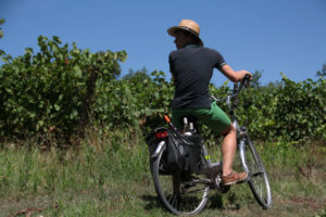 un promeneur à vélo dans un vignoble
