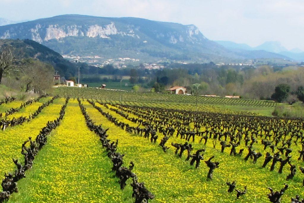 Oenotourisme Gorges de l'Hérault
