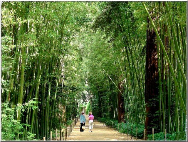 Bambouseraie à Anduze