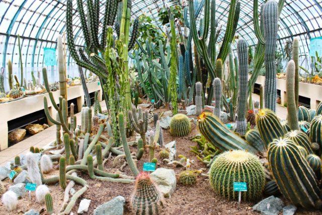 jardin au plantes
