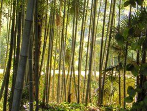 La Bambouseraie Prafrance en Cévennes